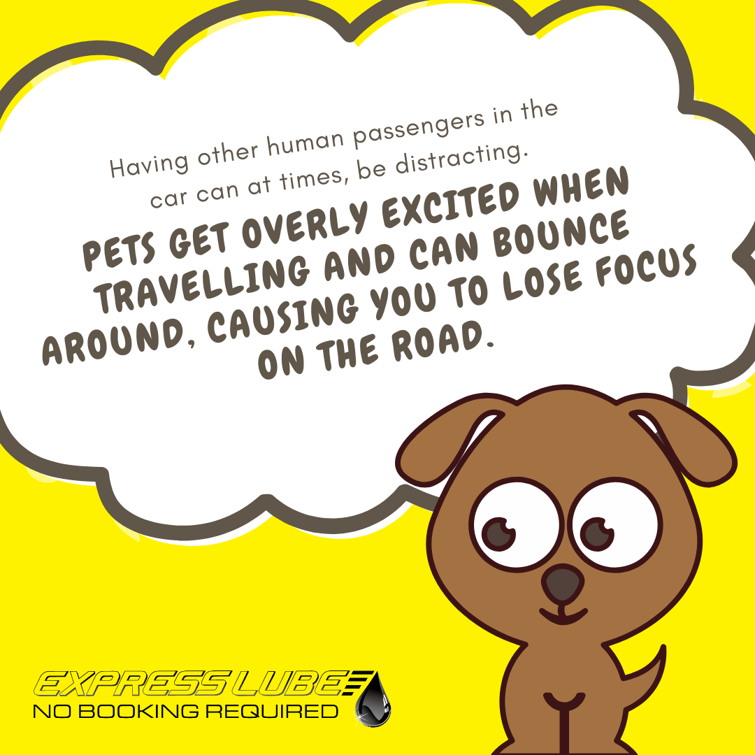 pets in cars