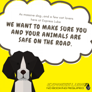 Express Lube wants you to keep your pets safe in cars