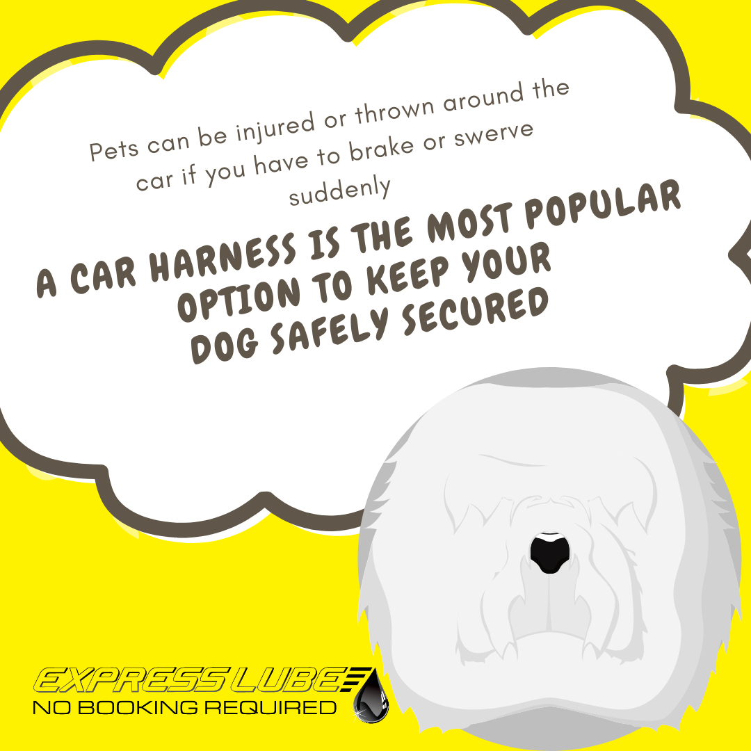 Keep pets safe in cars